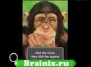 Are You Smarter Than A Chimp?
